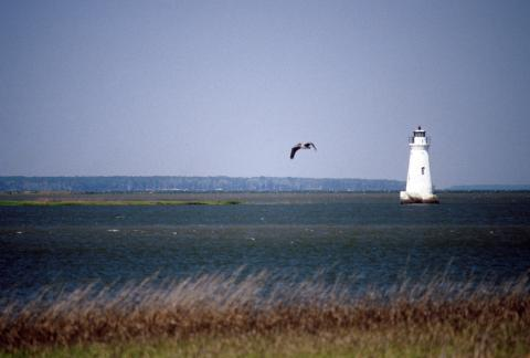 pelican flies with lighthouse in background